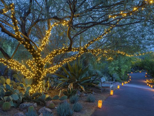 Luminarias at The Desert Botanical Garden in Phoenix