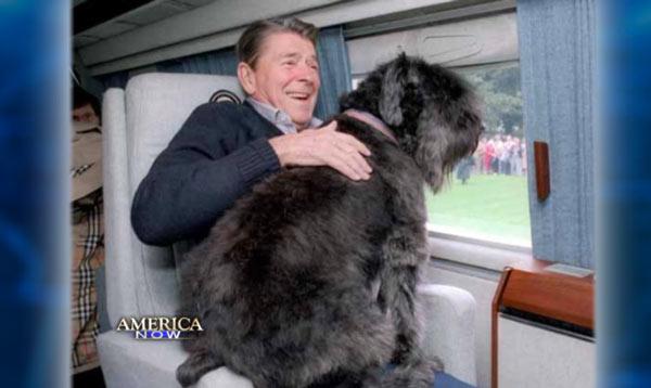 August 26 National Dog Day Rhapsody In Books Weblog