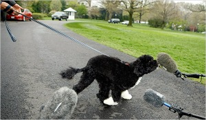 The Obamas' dog, holding a press conference