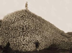 Buffalo Skulls 1870