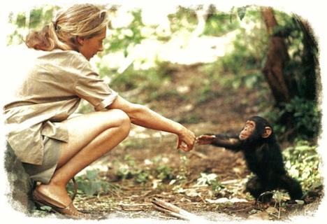 Jane-Goodall-and-chimp1