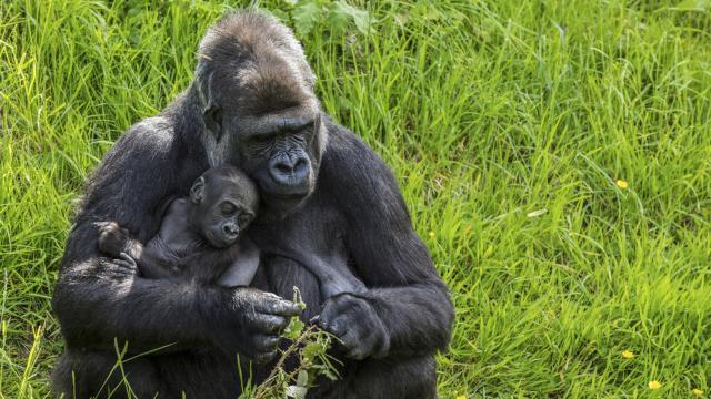 Picture via Animal Planet website
