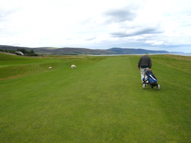One of my favorite pictures:  Jim and some farm animals playing a round of golf in Scotland