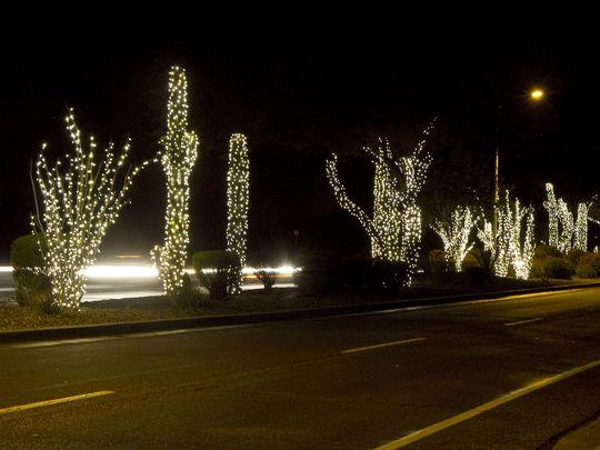 Cacti with Christmas Lights